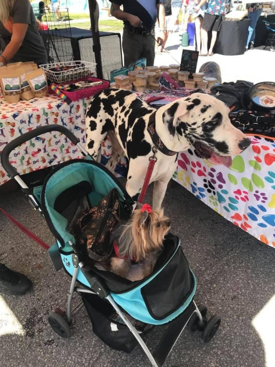 A Great Dane next to a small dog in a baby stroller