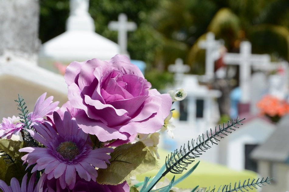 A close up of purple flowers in a cemetery