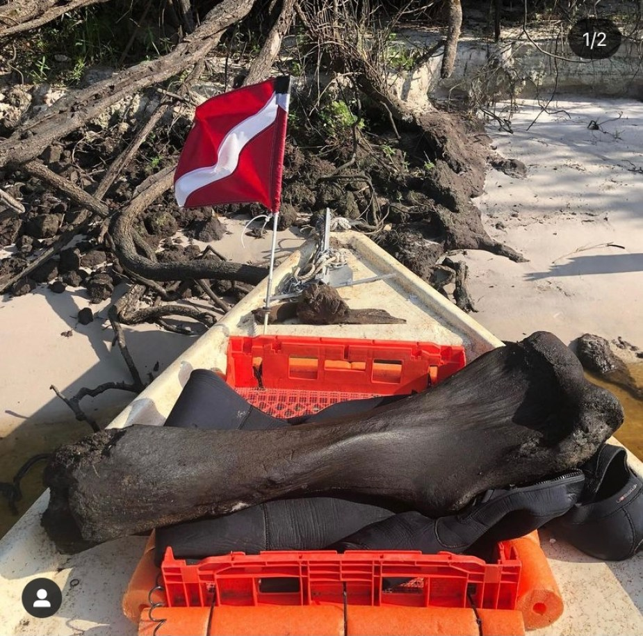 A late black bone on an orange crate on a beach, with a small red and white diving flag