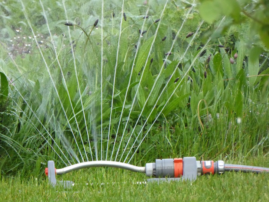 A close up photo of a sprinkler watering a grassy yard.