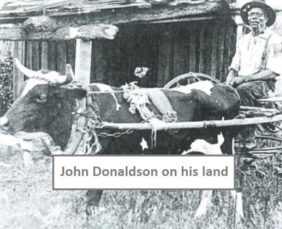 An old black and white photo of a cow fitted with a cart and a caption that reads John Donaldson on his land