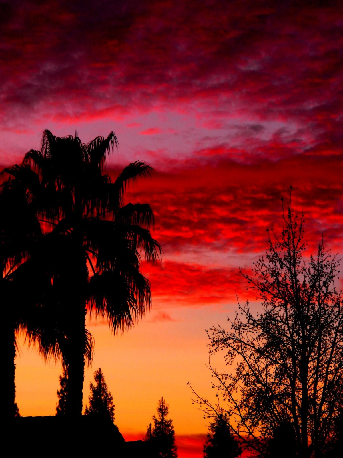 Pink and orange sunset with a palm tree