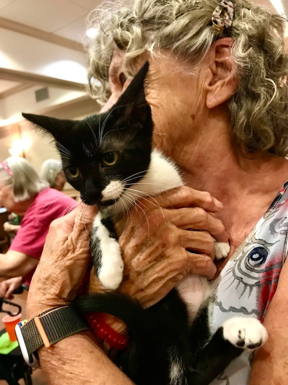 A close up photo of a black and white cat being held by a woman.