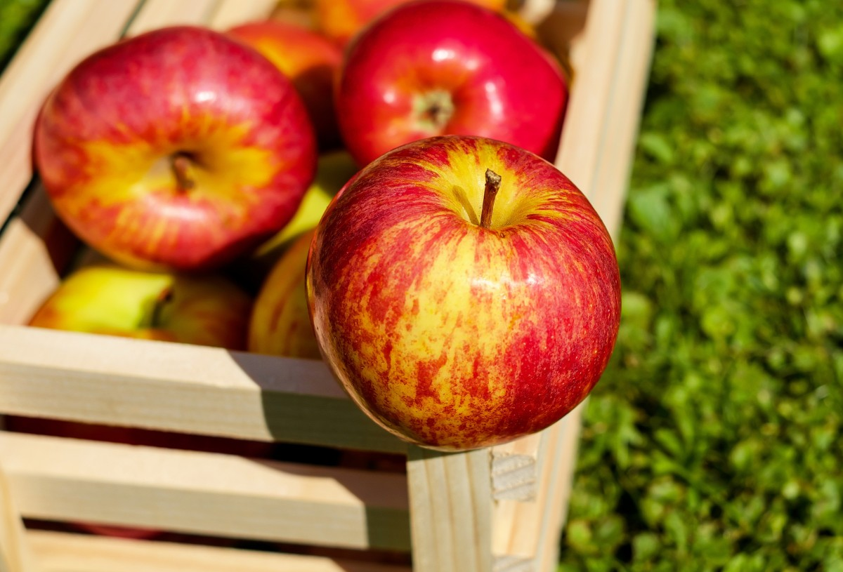 Red apples falling out of a basket