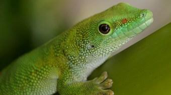 Green gecko sitting on a tree