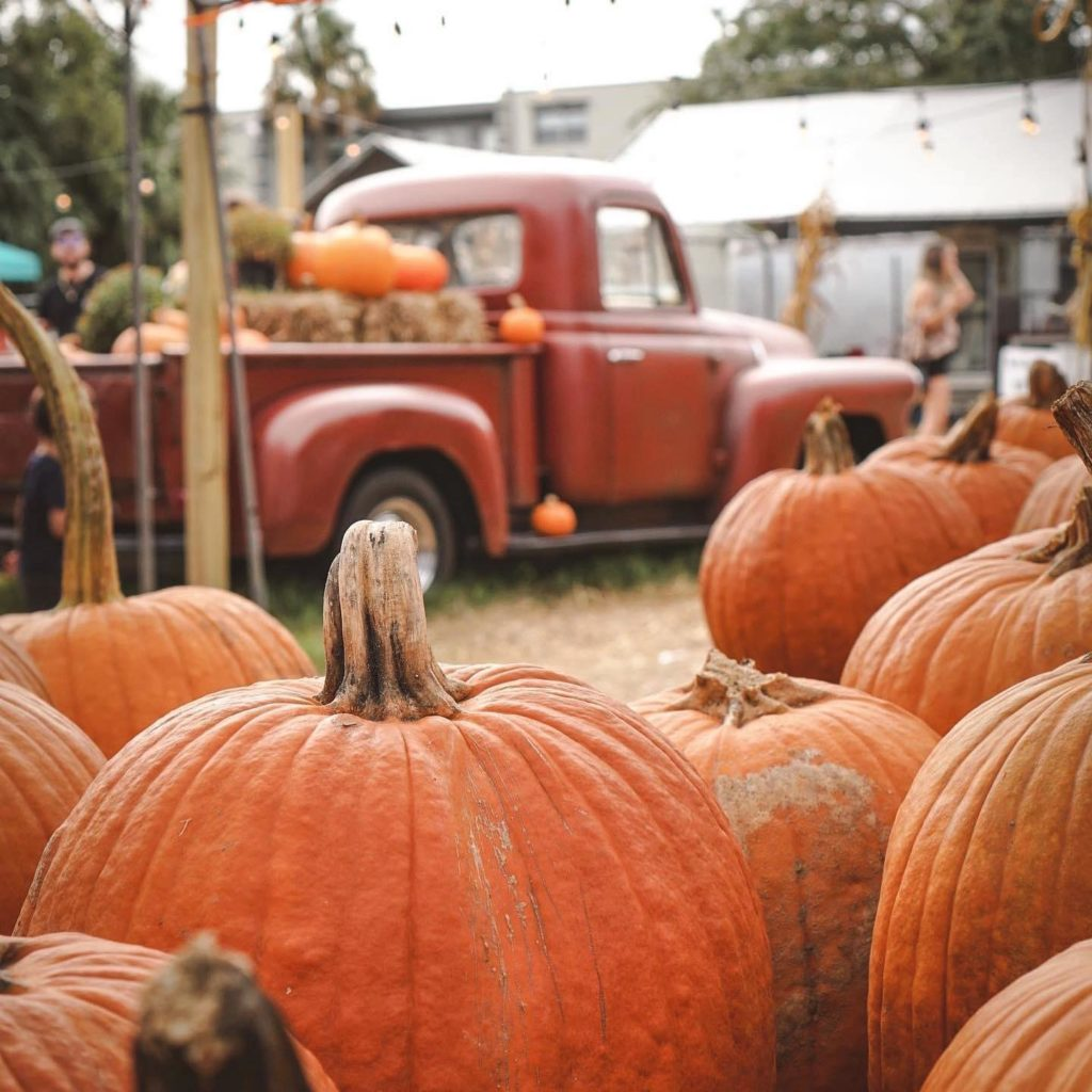 A photo of pumpkins in a patch with an old red truck in the background.