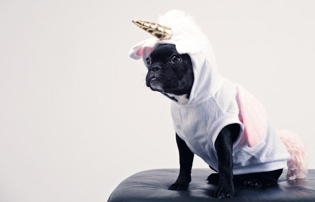 A photo of a small black dog in a white unicorn costume.