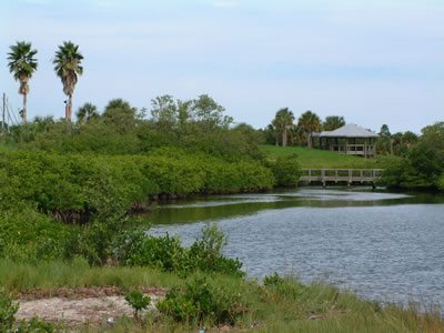 A marshy green river and trees at Clam Bayou Nature Park