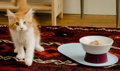 Cat Person Mesa Bowl No-Tip Food Dish