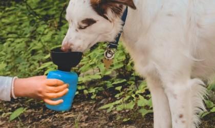 Lesotc Dog Water Bottle portable pet bowl