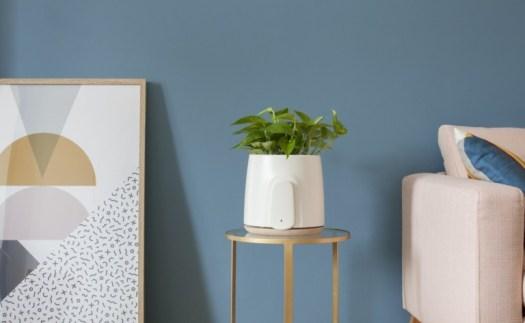 Natede Smart Natural Air Purifier