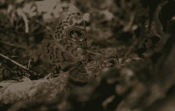 Bones 12x11 butterfly