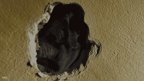 body in wall