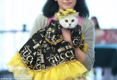 Cute cats dogs get all dressed high fashion show 7