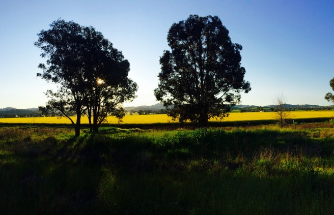 Driving alongside canola fields of neon yellow made the drive a pure pleasure.