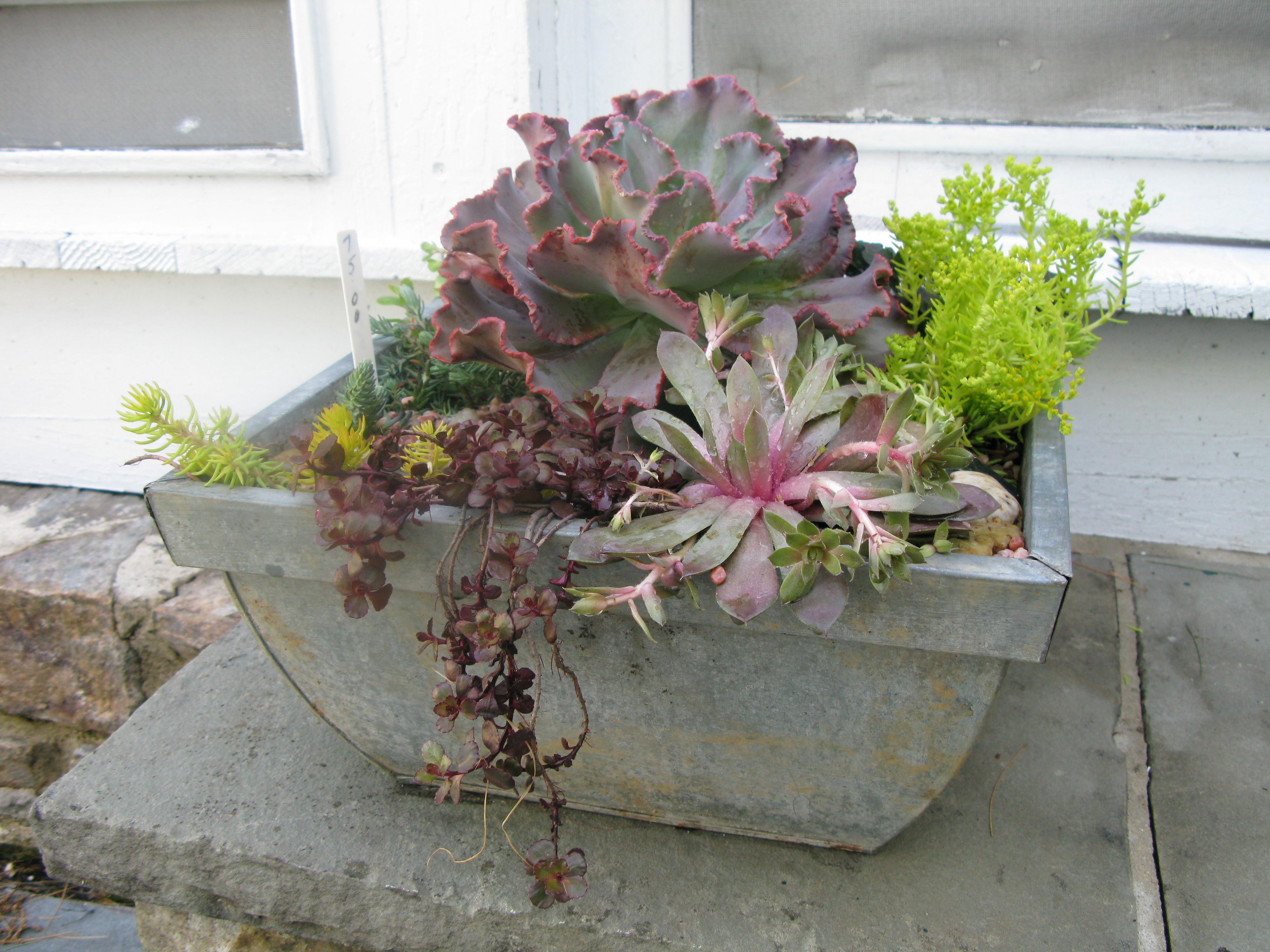 flower arrangement home decor allium rustic arrangement.htm transforming a patio     an outdoor living space that looks like  patio     an outdoor living space