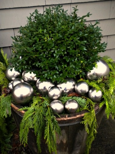 Boxwood with greens and silver balls