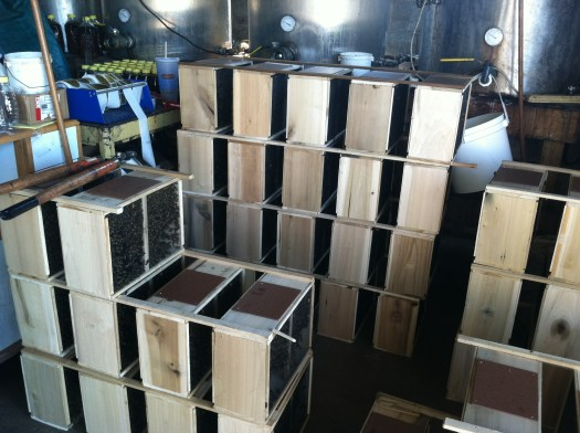 Stacks and stacks of packages of bees, over 400 in all!