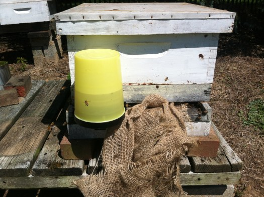 A feeder with sugar water and burlap stuffed into the entrance