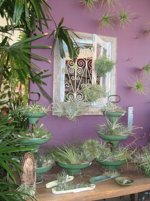 a great display of airplants