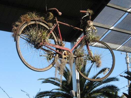 Hanging bicycles dripping with plants adorn the ceilings at Flora Grubb