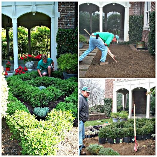 Installing a knot garden for a client