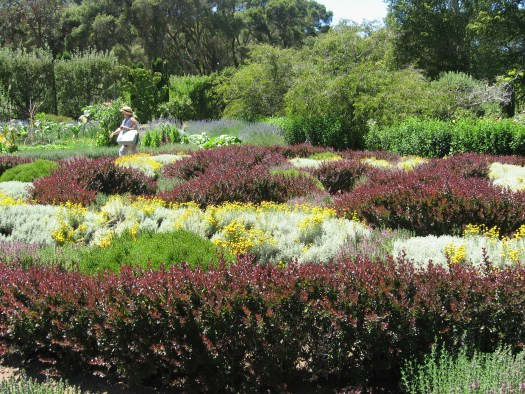 Large knot gardens at Filoli
