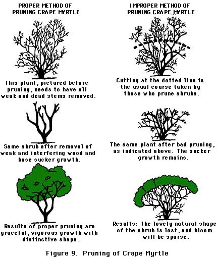 Proper pruning techniques