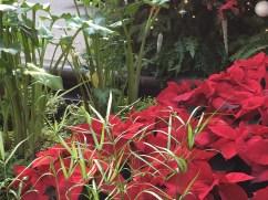 Longwood Christmas 2013 063