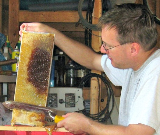 Removing beeswax cappings with a heated knife. The darker area is an older honeycomb that was formed earlier. The comb darkens with age.