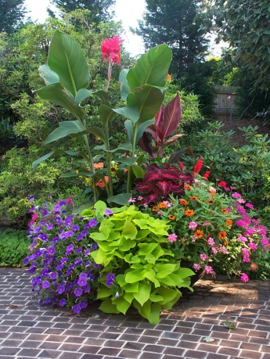 Container with a variety of plants for all summer color