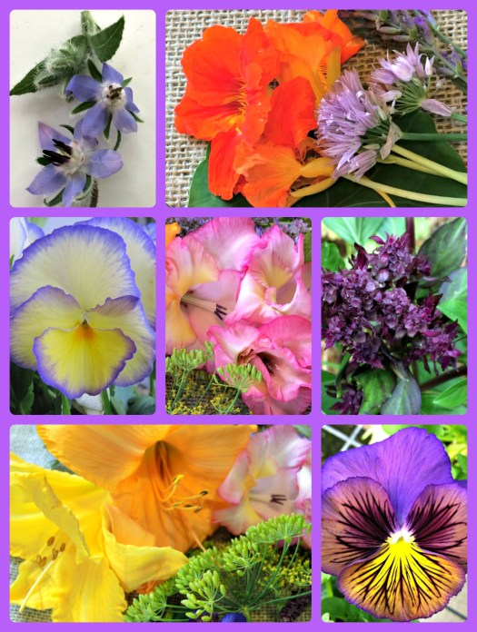 Edible blossoms-borage, nasturtium and chives, pansy, gladiolus, cardinal basil, daylily, pansy