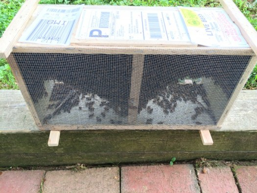 Bee package which includes a queen and 12,000 to 15, 000 bees as a starter