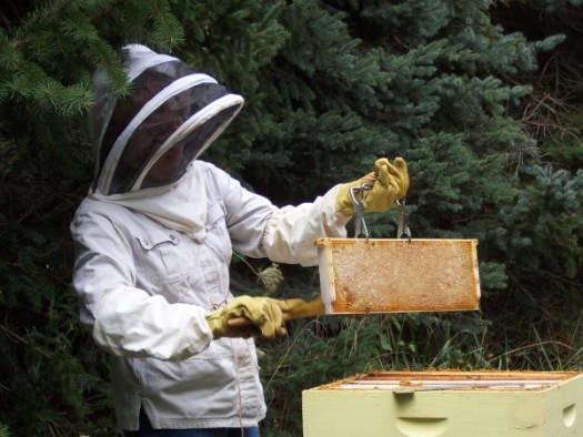 A perfect capped frame of honey
