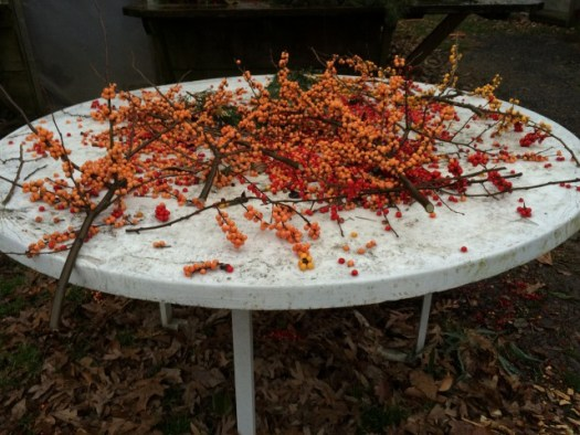 A table of winterberries, a deciduous holly