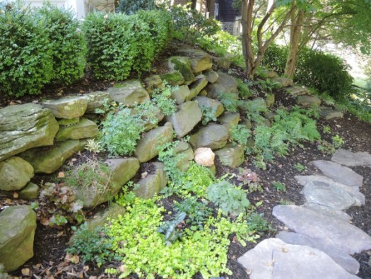 I was designing plantings for a boulder garden in the shade and wanted miniature hostas