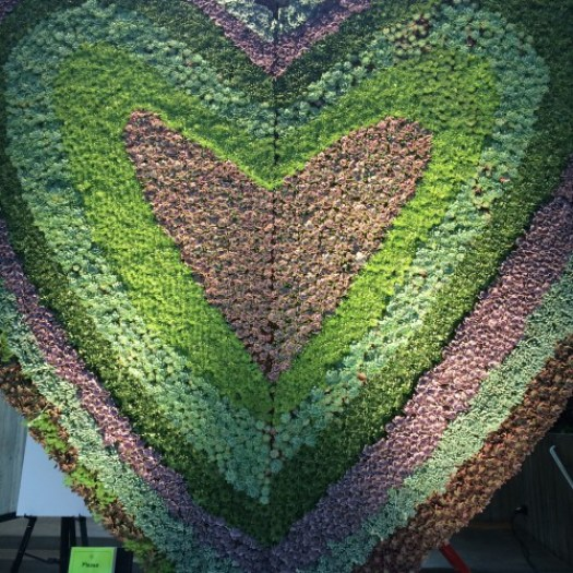 Heart of succulents