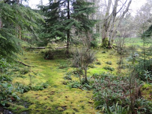 """A mossy """"lawn"""" is not as manicured as a fescue lawn but is perfect for shady locations"""