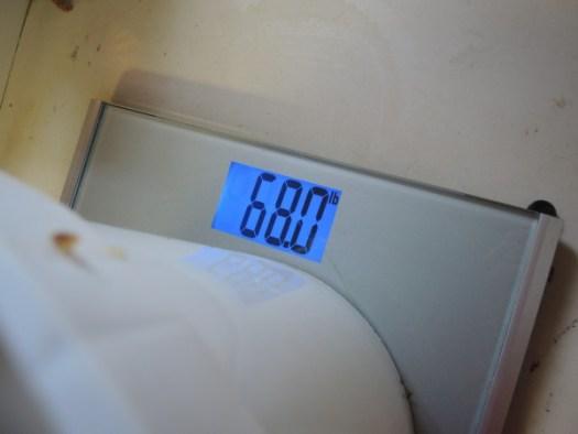 Weighing honey
