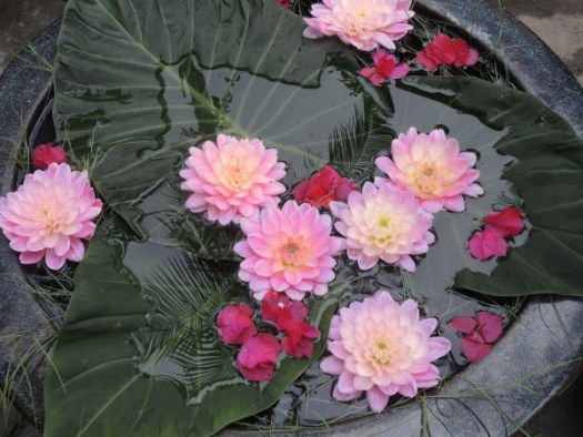 Chanticleer arrangement with Dahlias, Bougainvilla, and Elephant Ear leaves