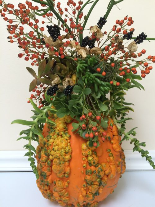 Gourd decorated with succulents