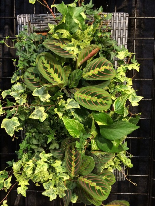 A framed living wall