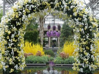 It is a double treat at Longwood with the Orchid Extravaganza