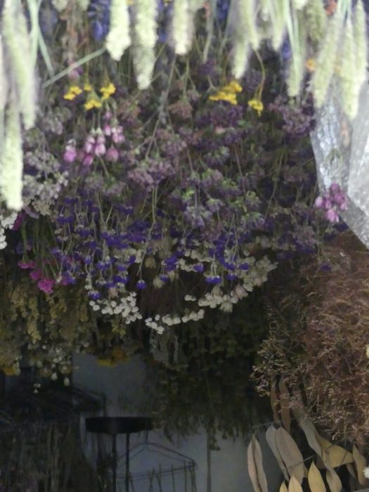 Hanging bunches of flower upside down to dry