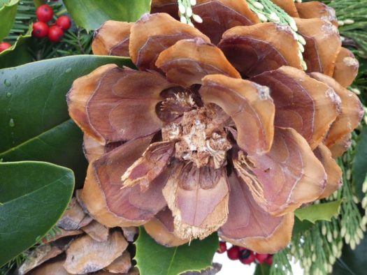 "Sugar Pine cones are cut into thirds to make these ""flower"" like decorations"