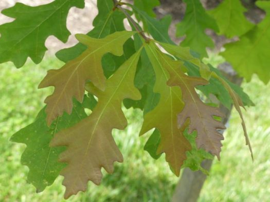 Pollinator Trees And Nature Centers