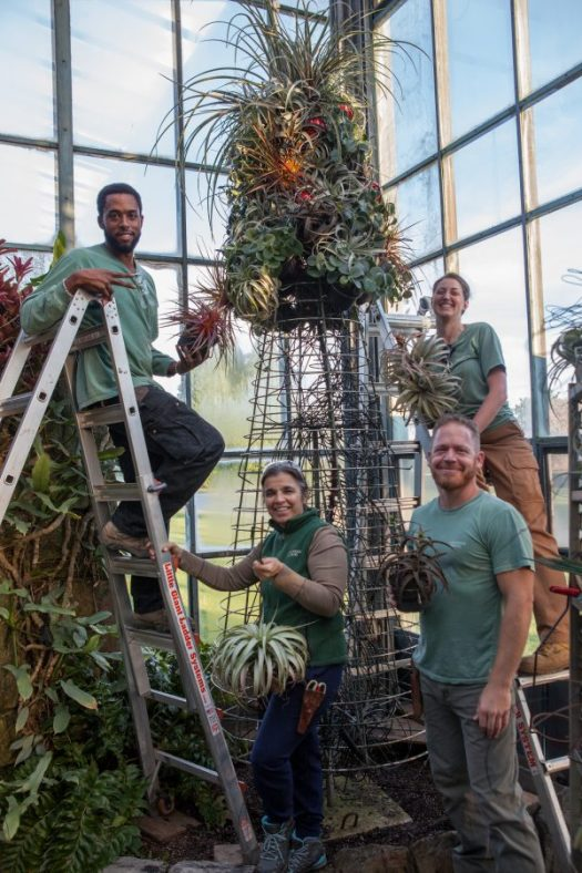Installing the air plant Christmas tree, photo by Longwood staff