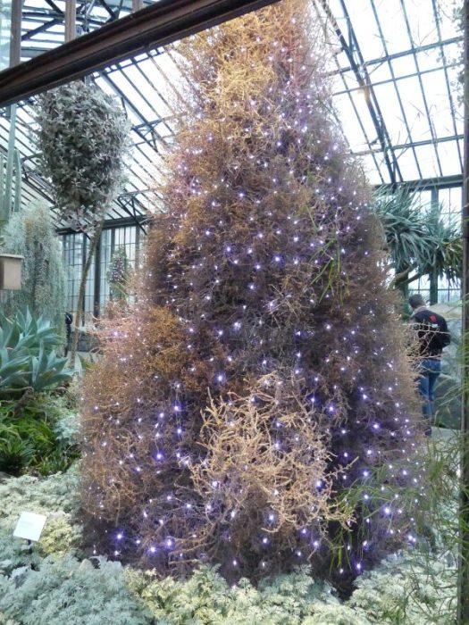 Tumbleweed Tree
