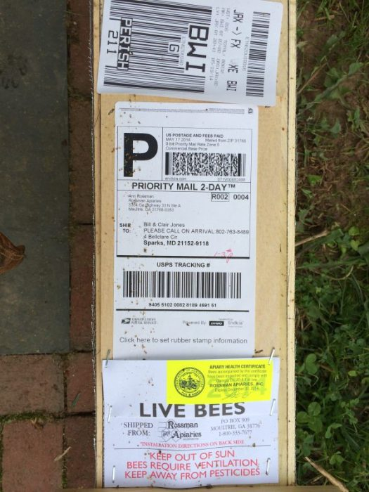 You can order bees by mail