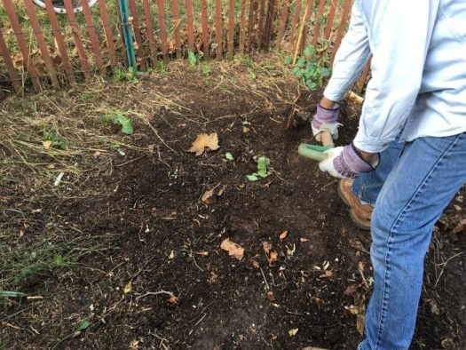 Shoveling out my rich compost and adding it to the garden
